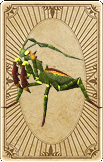large-trading-mantis-card.png