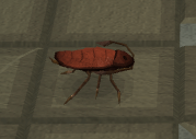 Warped cockroach